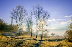 Paesaggio di autunno, albero in lampadina del sole, la conduzione della strada Immagine Stock