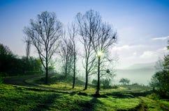 Paesaggio di autunno, albero in lampadina del sole, la conduzione della strada Fotografia Stock Libera da Diritti