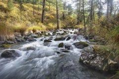 Paesaggio di autunno di Altai Fiume della montagna Fotografia Stock Libera da Diritti