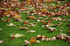 Paesaggio di autunno come fondo Fotografie Stock
