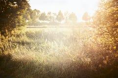 Paesaggio di autunno con erba e le foglie gialle con il cielo di luce solare fotografie stock libere da diritti