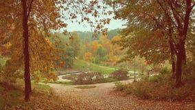 Paesaggio di autunno con gli alberi immagini stock libere da diritti