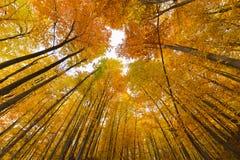 Paesaggio di autunno con gli alberi Fotografie Stock