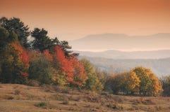 Paesaggio di autunno con gli alberi arancioni nel ligh di mattina fotografia stock