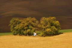 Paesaggio di autunno con gli alberi ed i campi ondeggiati fotografia stock libera da diritti
