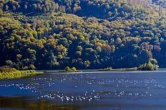 Paesaggio di autunno con gli uccelli Immagini Stock Libere da Diritti