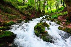 Paesaggio di autunno con il fiume della montagna che passa fra le pietre muscose per la foresta variopinta Immagine Stock Libera da Diritti