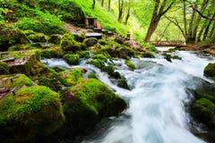 Paesaggio di autunno con il fiume della montagna che passa fra le pietre muscose per le piccole cascate cascata variopinta della  Fotografie Stock Libere da Diritti