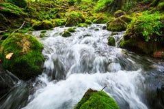 Paesaggio di autunno con il fiume della montagna che passa fra le pietre muscose per le piccole cascate cascata variopinta della  Fotografia Stock Libera da Diritti