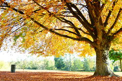 Paesaggio di autunno con il grande albero in parco Fotografia Stock