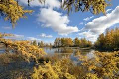 Paesaggio di autunno con il lago Fotografie Stock Libere da Diritti