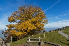 Paesaggio di autunno con il supporto vicino Rigi, Svizzera dell'albero giallo Fotografia Stock Libera da Diritti
