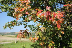Paesaggio di autunno con l'albero Immagini Stock Libere da Diritti
