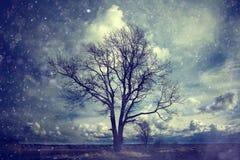 Paesaggio di autunno con l'albero solo Fotografia Stock