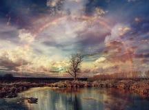 Paesaggio di autunno con l'albero solo Fotografia Stock Libera da Diritti