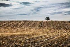 Paesaggio di autunno con l'albero solo e le nuvole drammatiche Fotografia Stock Libera da Diritti