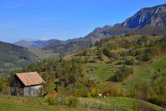 Paesaggio di autunno con la casa di campagna, le mucche e le montagne alla distanza in Romania immagine stock