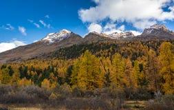 Paesaggio di autunno con la montagna in Val Martello, southtyrol, Italia Immagine Stock