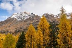 Paesaggio di autunno con la montagna in Val Martello, southtyrol, Italia Fotografie Stock Libere da Diritti