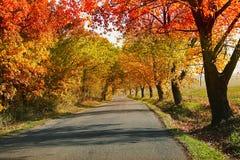 Paesaggio di autunno con la strada e gli alberi variopinti di autunno Fotografie Stock Libere da Diritti
