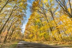 Paesaggio di autunno con la strada ed i bei alberi colorati fotografia stock