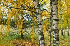 Paesaggio di autunno con parecchi alberi fotografia stock