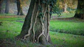 Paesaggio di autunno con un albero su cui modelli in rilievo stupefacenti Immagine Stock Libera da Diritti