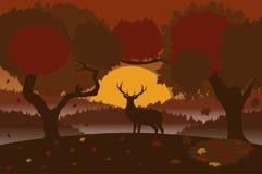 Paesaggio di autunno con un cervo Fotografia Stock