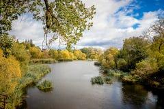 Paesaggio di autunno con un fiume e vegetazione sulle rive in un sunn Immagine Stock Libera da Diritti