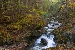 Paesaggio di autunno con una cascata sul taiga di The Creek. Immagine Stock Libera da Diritti