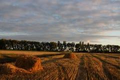 Paesaggio di autunno del giacimento di grano fotografia stock