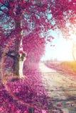 Paesaggio di autunno dell'albero immagini stock libere da diritti