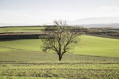 Paesaggio di autunno dell'albero Fotografia Stock Libera da Diritti