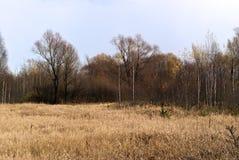Paesaggio di autunno della foresta Fotografia Stock