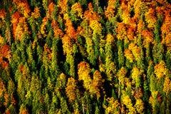 Paesaggio di autunno della foresta Immagine Stock
