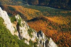 Paesaggio di autunno della foresta Fotografia Stock Libera da Diritti