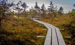 Paesaggio di autunno della palude gialla Immagine Stock Libera da Diritti
