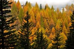 Paesaggio 3 di autunno delle alpi Fotografie Stock
