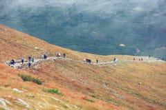 Paesaggio di autunno delle montagne nebbiose Fotografia Stock Libera da Diritti