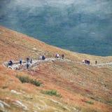 Paesaggio di autunno delle montagne nebbiose Fotografie Stock Libere da Diritti