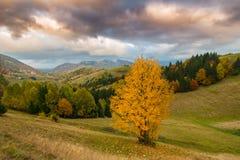 Paesaggio di autunno di ottobre nella zona di montagna a distanza nella Transilvania Immagine Stock Libera da Diritti