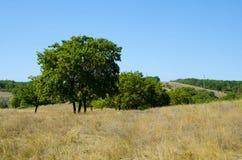 Paesaggio di autunno di terreno montagnoso Fotografia Stock