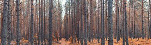 Paesaggio di autunno in foresta attillata fotografie stock libere da diritti