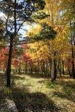 Paesaggio di autunno - foresta mista Fotografia Stock Libera da Diritti