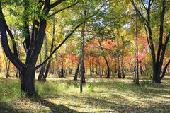 Paesaggio di autunno - foresta mista Fotografie Stock