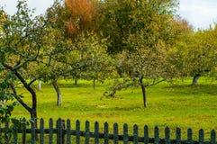 Paesaggio di autunno - frutteto di autunno della mela Immagini Stock