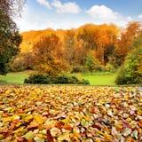 Paesaggio di autunno. Le foglie nella priorità alta. Fotografia Stock