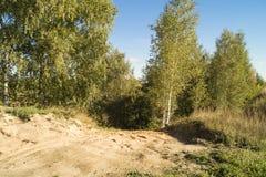 Paesaggio di autunno in legno di betulla Fotografia Stock