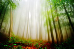 Paesaggio di autunno nella foresta Fotografia Stock