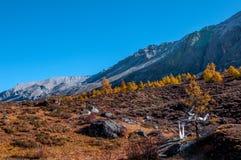 Paesaggio di autunno nella riserva naturale di Yading immagini stock libere da diritti